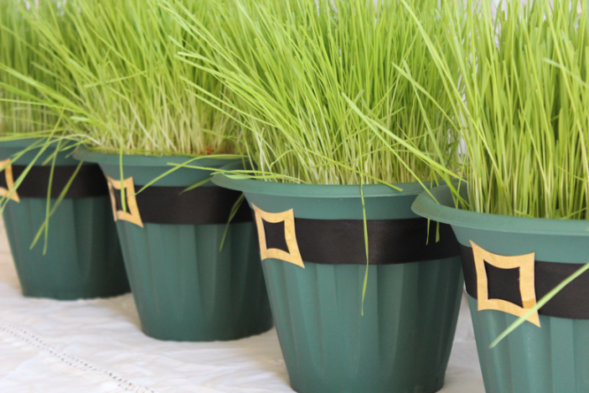 St.-Patrick's-Day-Wheat-Grass-Centerpieces